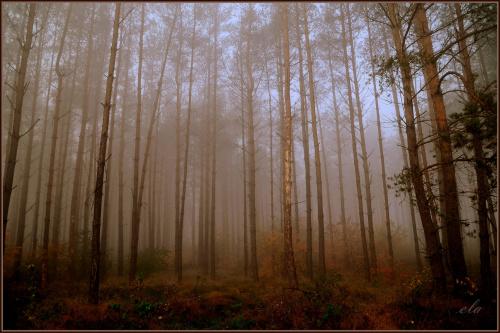 Jesien w lesie .