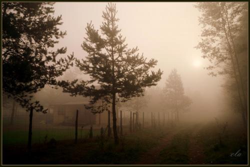 Mglista jesień
