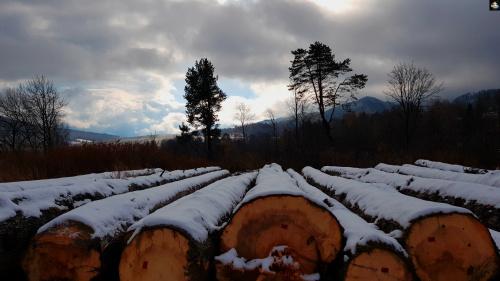 #PstrykCodzienny - memento dla ściętych drzew