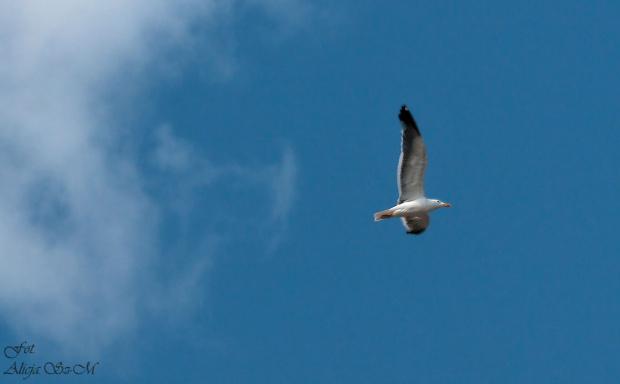 Helgoland i jej uroki.. #mewy #helgoland #morze #wyspy