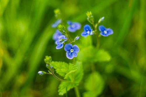 kwiatek na leśnej łące
