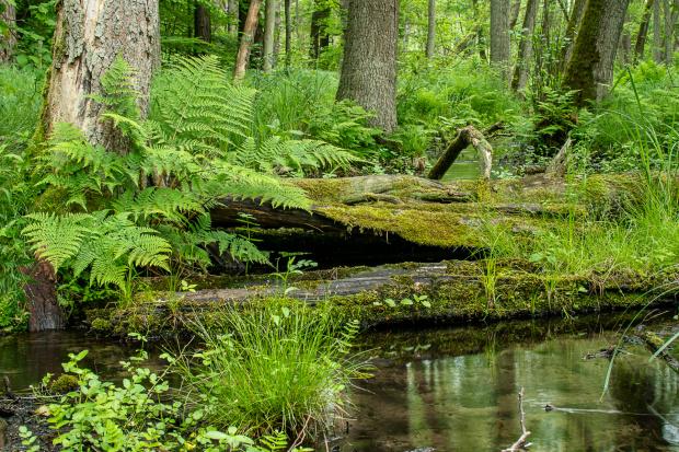 woda w lesie