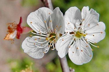 Kwiaty - bez zrywania/ścinania