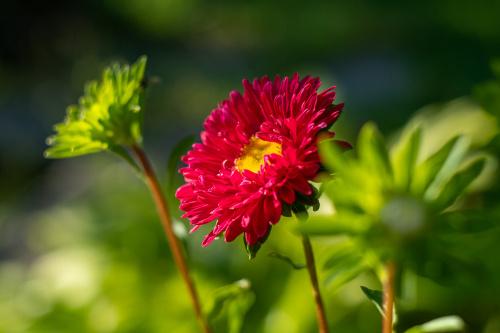 Działkowe kwiatkowe love