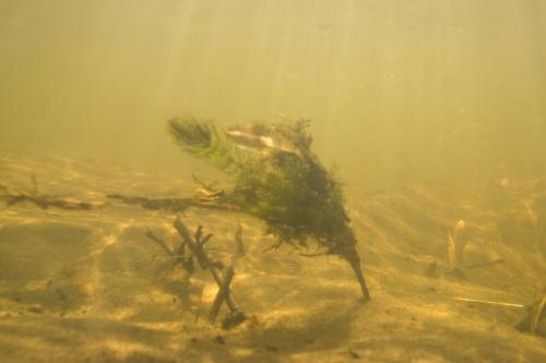 Podwodne amatorsko