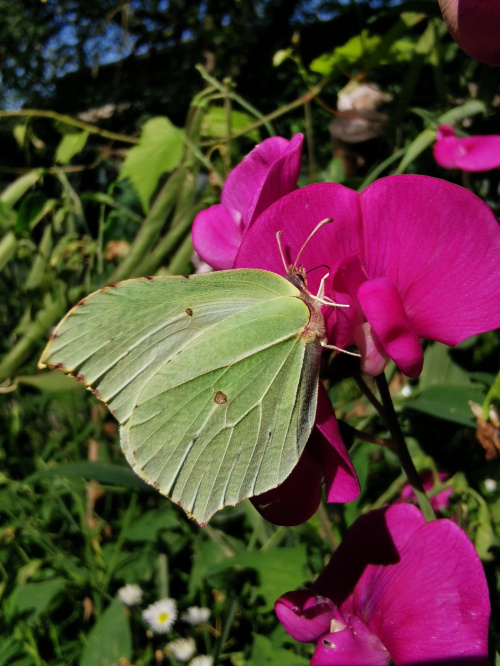 #motyl #natura #butterfly #nature #lovephotografy