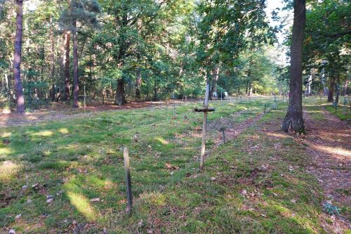 Cmentarz przyszpitalny3