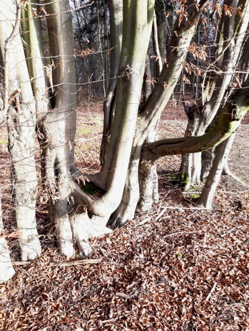 Krztywe drzewa