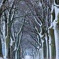 Zima #zima #śnieg #drzewa #Chojnice