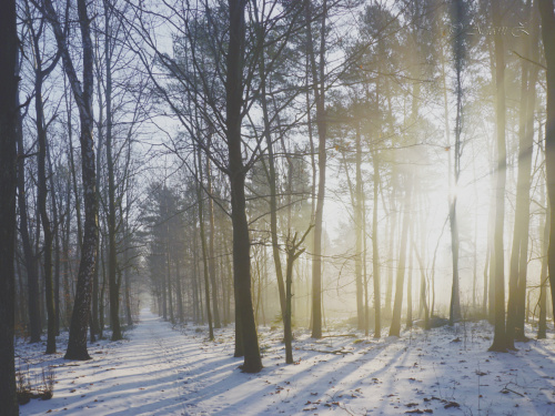 W lesie o poranku