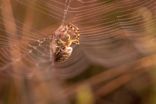 Ofiata i pająk