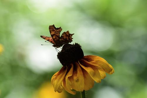 Motylkolandia
