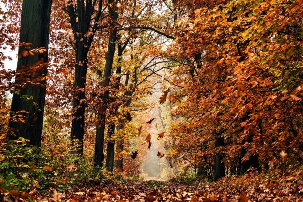 to już zaawansowana jesień.:)
