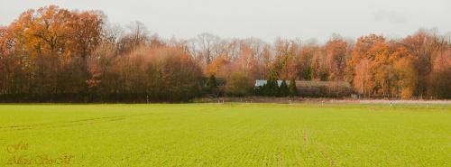 Jesien w NRW.. #Jesien #natura #lasy #Polnocnej #Westfalii