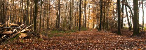 jesien w NRW #Jesien #natura #lasy #Polnocnej #Westfalii