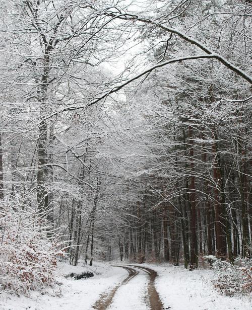 W zimowej krainie