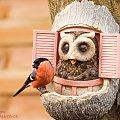 Gil #ptaki #ogrody #zima #gile