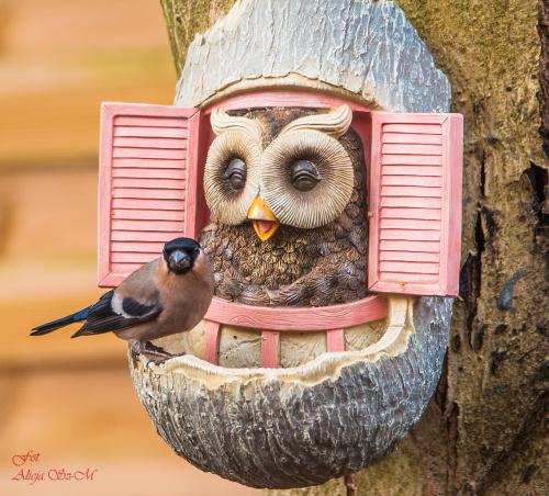 Cudowne ptaki-Gile #ptaki #ogrody #zima #gile